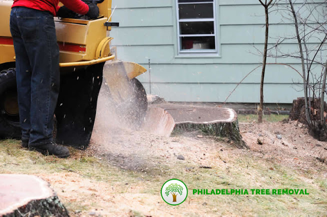 tree-stump-grinding